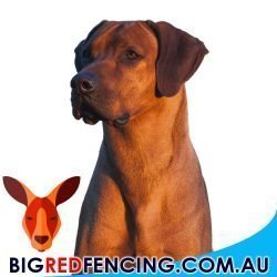 Electric Fences For Dogs and Pets