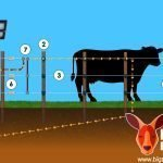 ELECTRIC FENCE DIAGRAM FOR PARTS AND COMPONENTS NEEDED TO SET UP A DIY ELECTRIC FENCE
