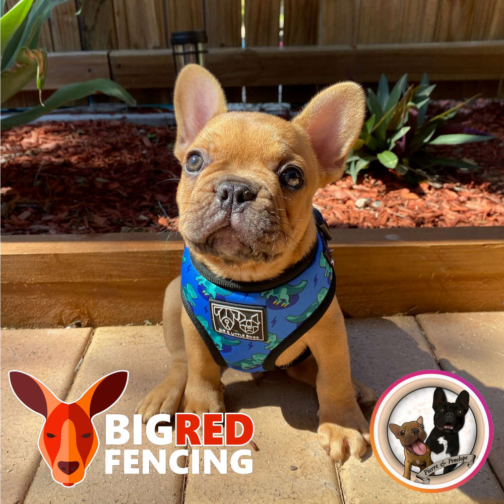 Is it safe to use an electric fence for small dogs and animals